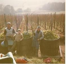 Vins Landmann